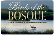 "Icon for ""Birds of the Bosque"""